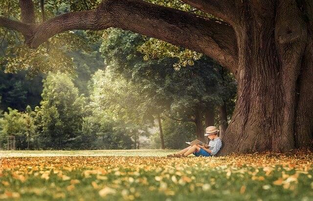 Ein Kind sitzt unter einem Baum und liest in einer Kinderbibel